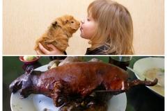 meerschweinchen-mit-kind[1]_collage