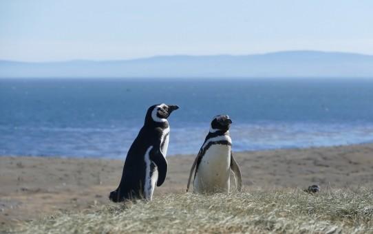 Punta Arenas nach Puerto Natales und Isla Magdalena - Video