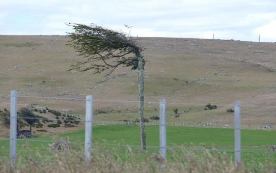 Wie fotografiert man den Wind?