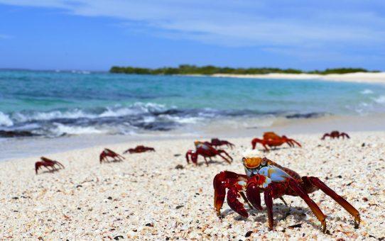 GALAPAGOS - Just another day in Paradise - Das Leben, wie es sein sollte!